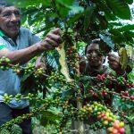 INIA potencia calidad y rendimiento del cultivo de café