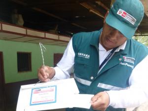 Previenen ingreso de polilla de la papa en Amazonas
