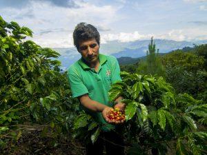 Productores del Vraem entregarán 10 mil tazas de café gratis