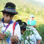 Recrean actividades tradicionales con la hoja de coca