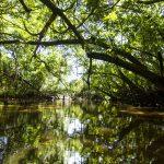 Regiones amazónicas aplicarán tecnología avanzada para elaborar mapa de humedales