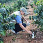 San Martín: Tecnología de fertirriego por goteo en parcelas demostrativas de café