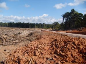 Serfor destaca sentencia del PJ contra el tráfico ilegal de madera en Loreto