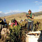 Presupuesto multisectorial de más de S/ 15 mil millones se utilizará para reactivar el sector agrícola