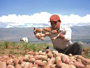 Campaña RicaPapa busca elevar productividad de productores con un menor impacto ambiental