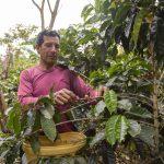 Encuesta a productores permitirá información relevante para reactivar la caficultura