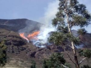 Extinguen 15 incendios forestales