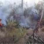 Extinguen incendios forestales en Ucayali