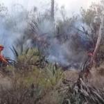 Extinguen incendio forestal en Pasco