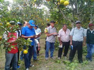 Desarrollan II Encuentro de Productores de Naranja en San Martín