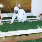 Implementan laboratorio de producción de hongos benéficos para mejorar productividad del cacao
