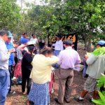 Promueven el desarrollo productivo de la naranja en San Martín