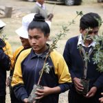 Realizan jornada de forestación en Junín