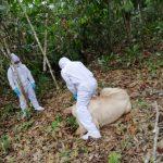 Ucayali: Senasa fortalece medidas sanitarias frente a brote de rabia silvestre