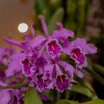 Orquídeas son víctimas del comercio ilegal de vida silvestre