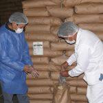 Ayacucho duplicó exportaciones de quinua durante en 2019