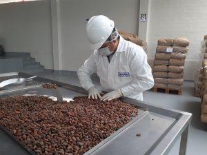 Cacao nativo de Junín llegará a mercado alemán