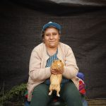 Cajamarca es el principal productor de cuy en el Perú