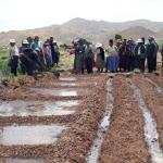 Implusarán campaña de siembra de pastos y forrajes 2019 – 2020