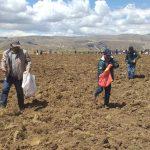 Minagri inició campaña de siembra de pastos en Junín