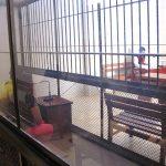 Madre de Dios: Cárcel a pareja de esposos por trata de personas