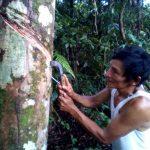 Madre de Dios: Implementan plan para incentivar competitividad forestal