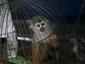 Perú será sede de conferencia sobre comercio ilegal de vida silvestre