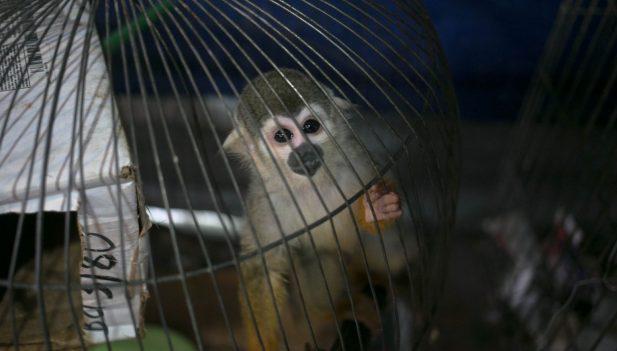 América, decidida a detener comercio ilegal de vida silvestre