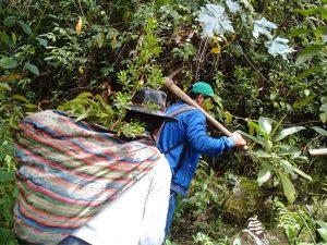 Crearan red nacional de restauración de ecosistemas forestales