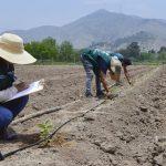 Continúan identificación de semillas de maracuyá para dinamizar exportación