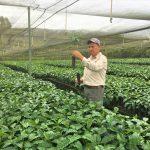 Nuevo programa de café y cacao fortalecerá productividad de 18 000 productores peruanos