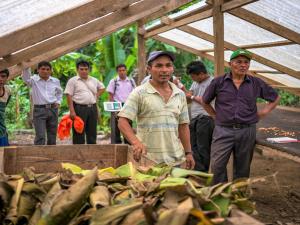 San Martín: Productores fortalecerán capacidades en el cultivo de cacao