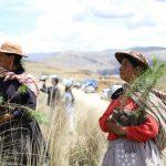 Junín: Lanzan campaña de forestación «Los Andes verde»