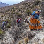 Moquegua: Reforestan praderas con cuatro mil plantones