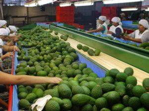 Agroexportaciones cerrarían este año en US$ 7,500 millones
