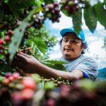 Devida invirtió S/ 21 millones a favor de comunidades del Alto Huallaga