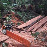Cusco: Ocho años de prisión para conductor por trasladar madera ilegal