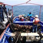 Decomisan 30 toneladas de concha de abanico de procedencia ilegal
