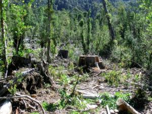 COP25: Perú logró reducir deforestación en la Amazonía en el 2018