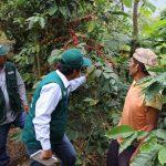 Impulsarán programa de mejoramiento genético del café