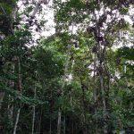 Loreto es la región con mayor número de áreas de conservación