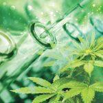 Minagri regula la investigación científica en Cannabis medicinal