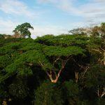 Alistan hoja de ruta para impulsar el manejo forestal comunitario