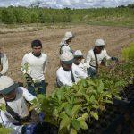 Ampliación de la ley de promoción agraria fortalecerá al sector forestal