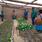 Fortalecen producción agrícola en zonas vulnerables a heladas