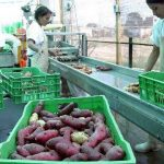 Aseguran que suspensión de exportación de hortalizas a Bolivia carece de argumentos técnicos
