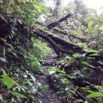Sendero turístico en SN Pampa Hermosa cierra temporalmente por mantenimiento