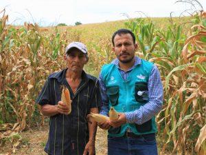 San Martín: Beneficiarán a tres mil productores de maíz con proyecto regional