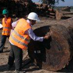 Comunidades nativas deberán registrar la madera que aprovechan