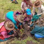 Cusco: Inician instalación de plantones forestales en cuencas de Anta